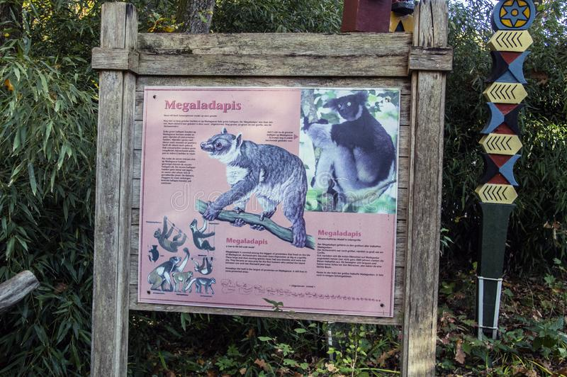 Billboard Megaladapis At Apenheul Zoo Apeldoorn Países Baixos 2018 fotos de stock royalty free