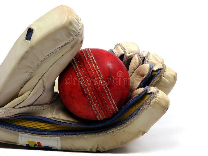 Bille de cricket de fixation de gant images libres de droits