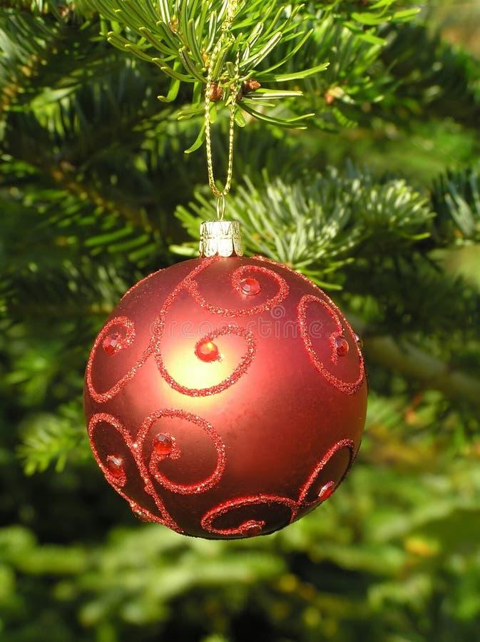 Bille rouge de Noël s'arrêtant sur un arbre de Noël photographie stock libre de droits