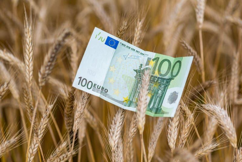 Billete de banco y trigo euro foto de archivo