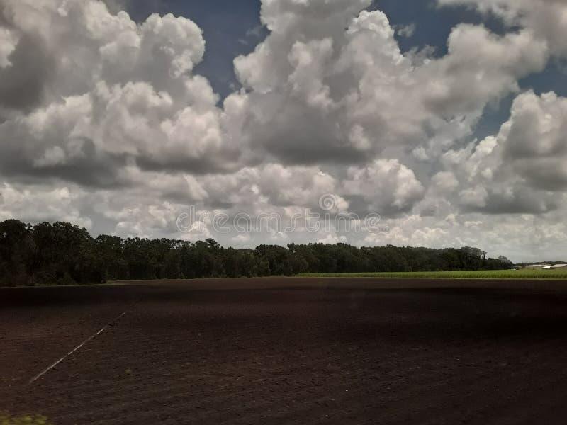 Billowy облака и горизонт сосны в Техасе от поезда стоковые фотографии rf