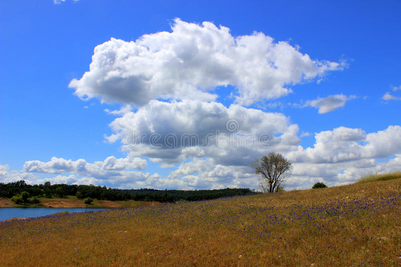 Billowy Clouds royalty free stock images