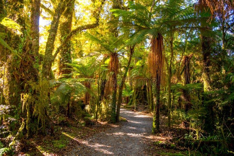 Billy Falls Track d'urlo, situato nel parco nazionale d'aspirazione di Mt, la Nuova Zelanda fotografia stock