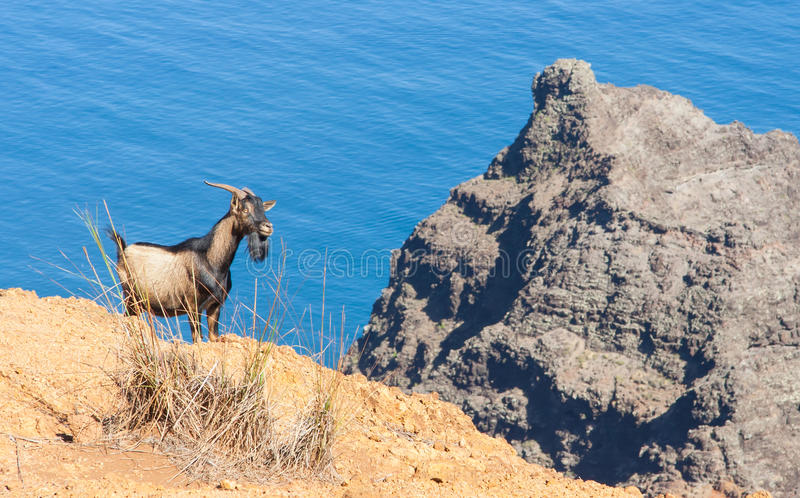 Download Billy Goat Royalty Free Stock Photo - Image: 28130465