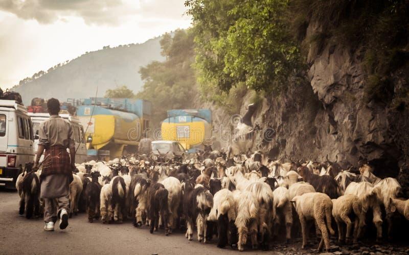 Bilpunkt av siktsbilden En flock av får som promenerar en landshuvudväg i himalayan bergpasserande i den Leh Ladakh Manali vägen  arkivbild
