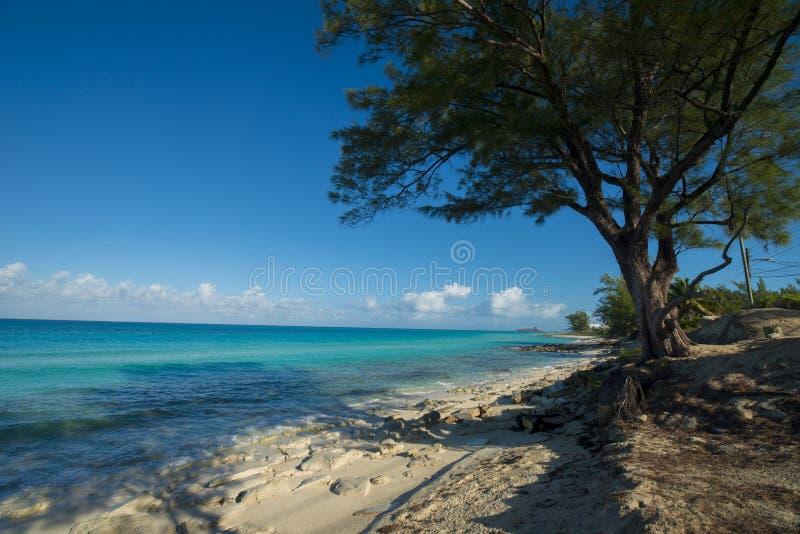 Bimini海岛使更宽的射击靠岸 库存照片