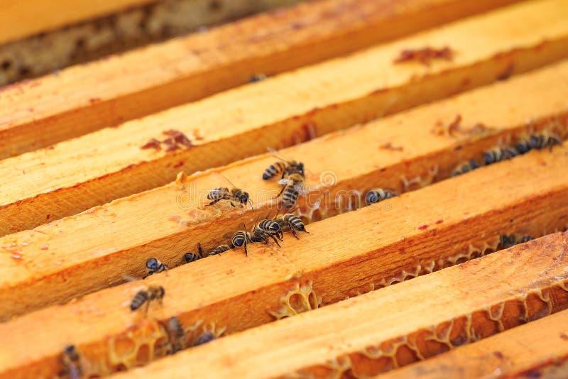 Bin, bikupor och honungskördearbetare i en naturlig bygdbikupa royaltyfria bilder