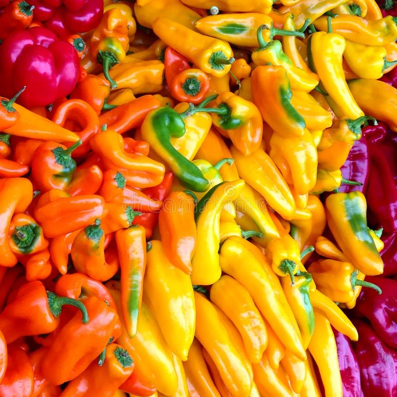 Bin of colorful peppers royalty free stock photography
