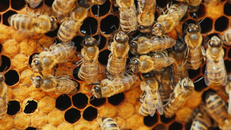 Bin fyllde med honung, honungskakan, bearbetat bipollen arkivbilder