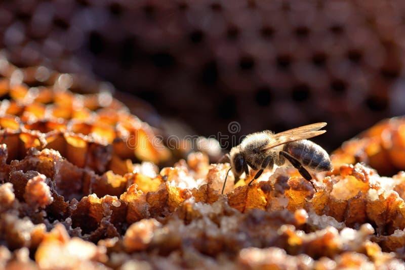 Bin i en bikupa på honungskakan arkivbild