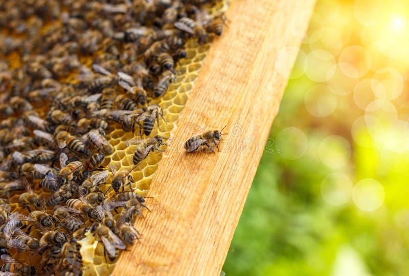 Bin i honungskakor arkivbilder