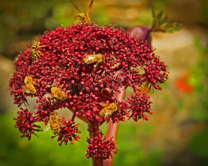 Bin på en blomma royaltyfri foto
