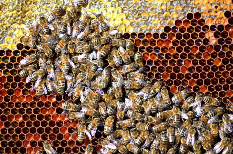 Bin på honungskakan royaltyfri foto