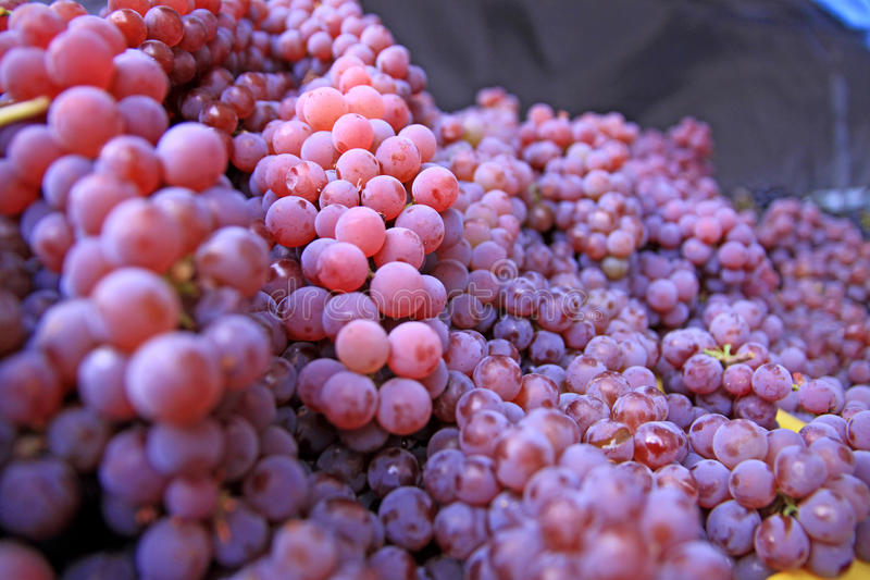 Bin of Red and Green Grapes stock image
