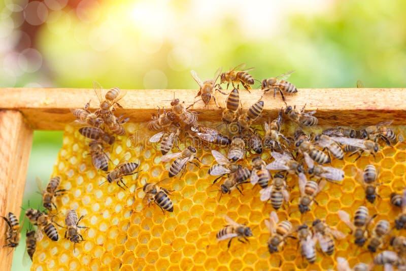 Bin som svärmer på en honungskaka royaltyfri fotografi