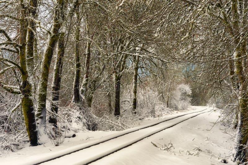 Binari ferroviari innevati attraverso gli alberi immagini stock libere da diritti