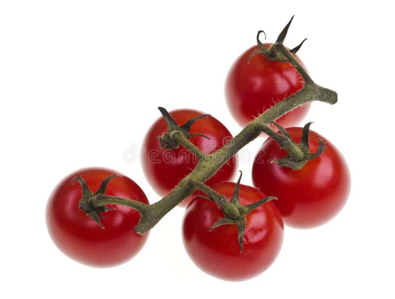Binder Cherry Tomatoes stockfotografie