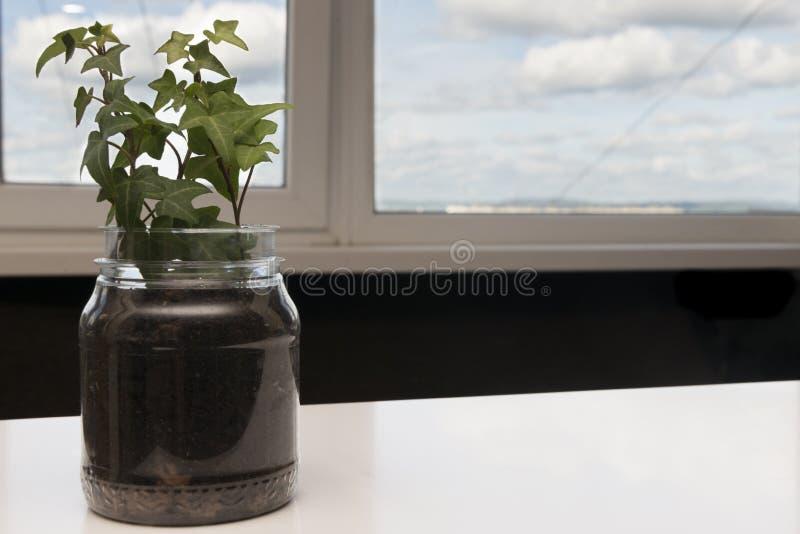 Bindweed na windowsill, tło chmury zdjęcia stock