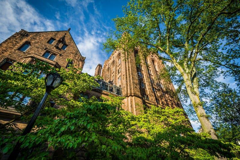 Bingham Hall, auf dem Campus von Yale University, in New-Haven, Co lizenzfreie stockbilder