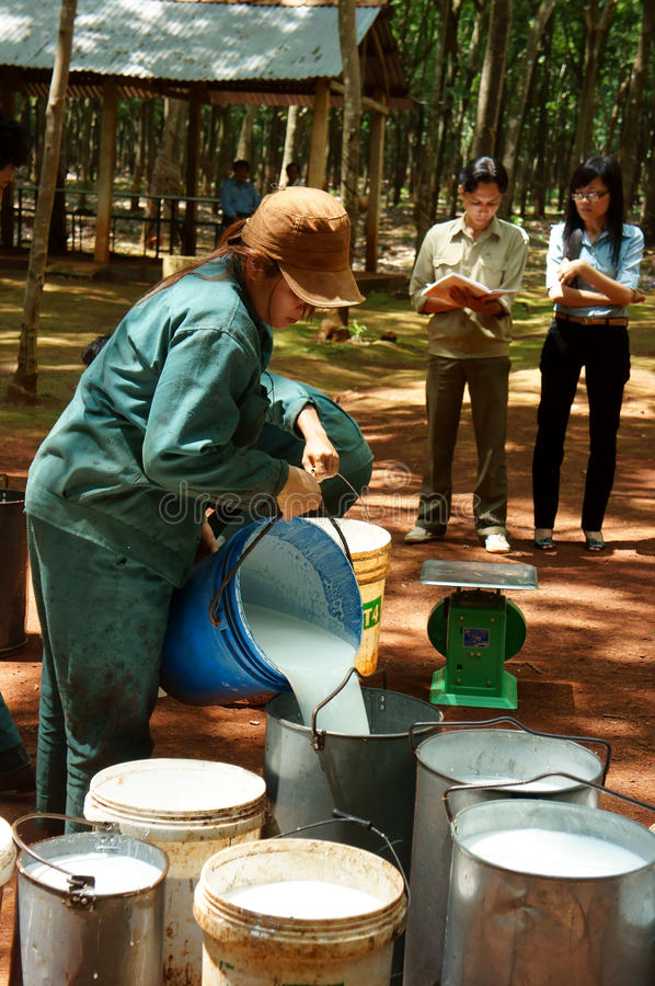 Download Worker Weigh Latex Rubber At Rubber Plantation Editorial Stock Photo - Image: 33467638