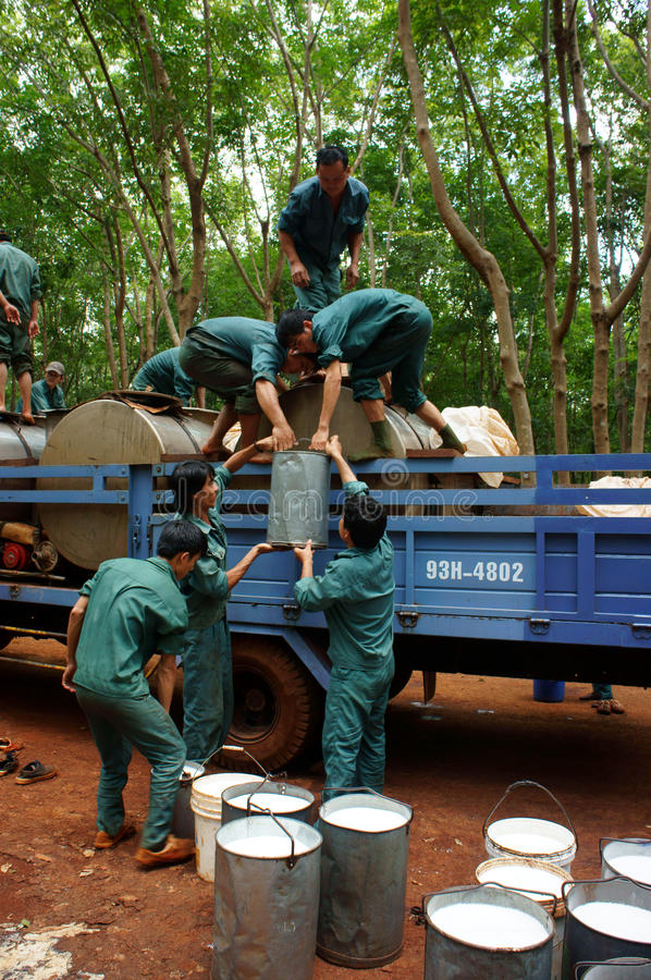 Download Worker Working In Teamwork At Rubber Plantation Editorial Photography - Image: 33467642