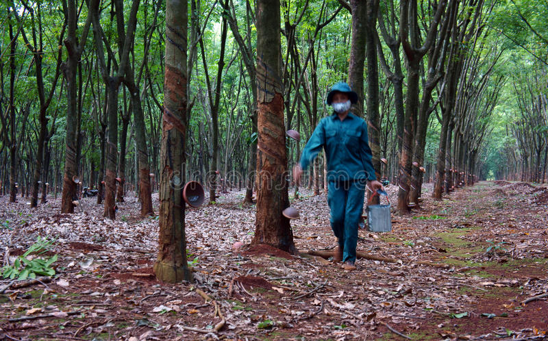 Download Worker Collecting  Latex Rubber  At Rubber Plantat Editorial Stock Image - Image: 33467649