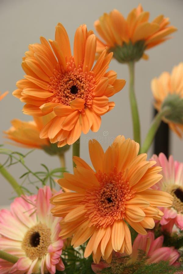 Binnen bloemen royalty-vrije stock foto's
