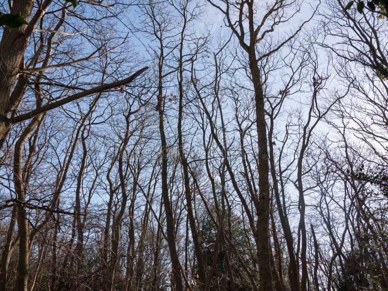 binnen bos zonnige groene de weg bosaard naakte B van straalbomen royalty-vrije stock afbeelding