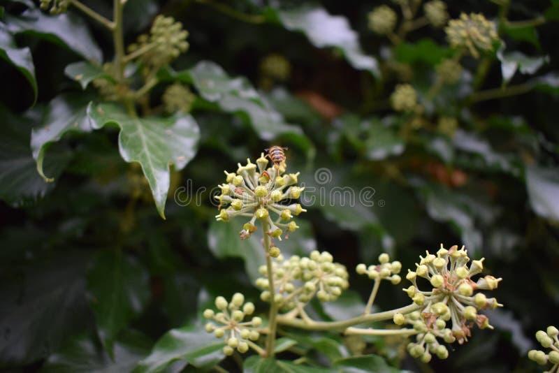 Binnen de Bloemen stock afbeelding
