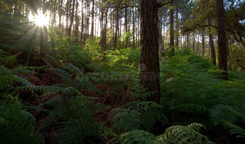 Binnen het bos stock foto