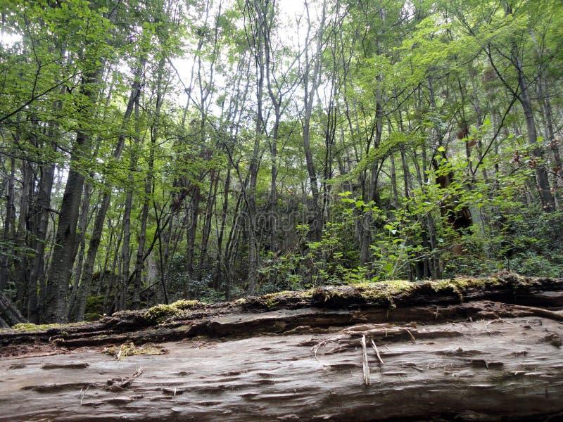 Binnen het bos royalty-vrije stock foto