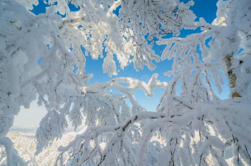 Binnen van sneeuwbos royalty-vrije stock fotografie