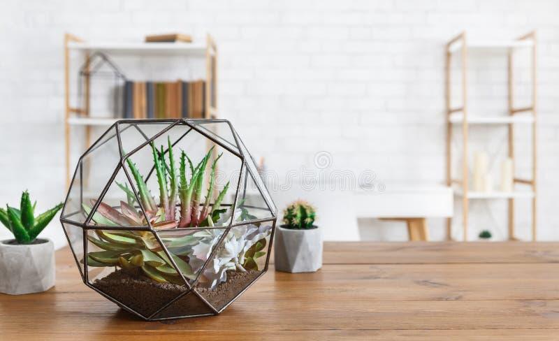 Binneninstallaties in potten en florariumvaas Huisinstallaties in binnenlands concept royalty-vrije stock afbeeldingen