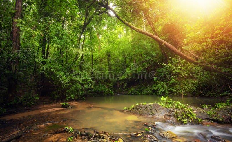 Binnenkant in regenwoudwildernis met tropische installaties en zonlicht stock afbeelding