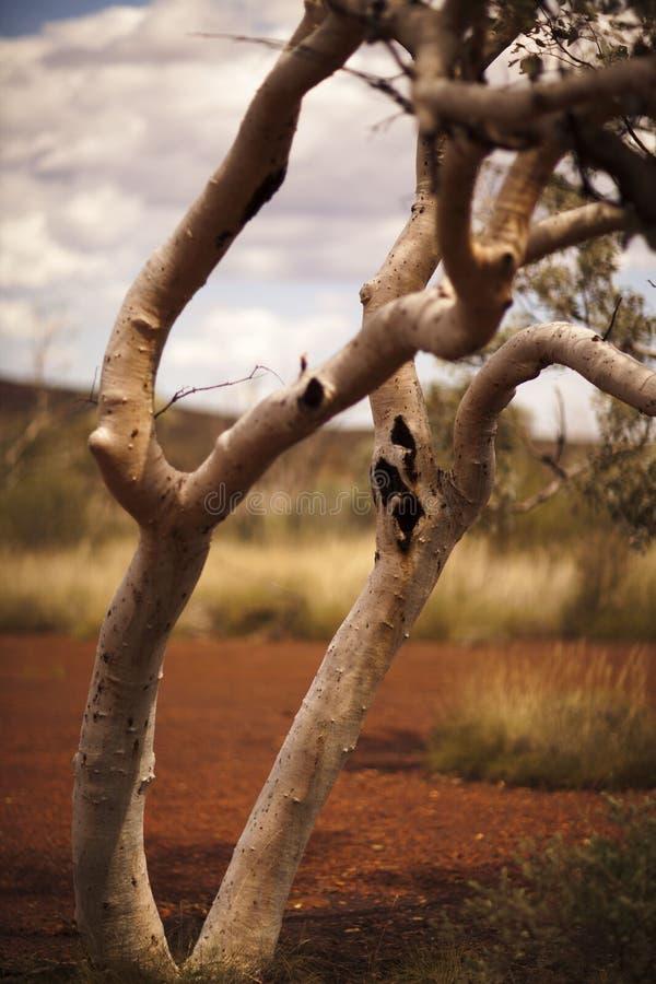 Binnenland in Pilbara, Westelijk Australië stock afbeeldingen