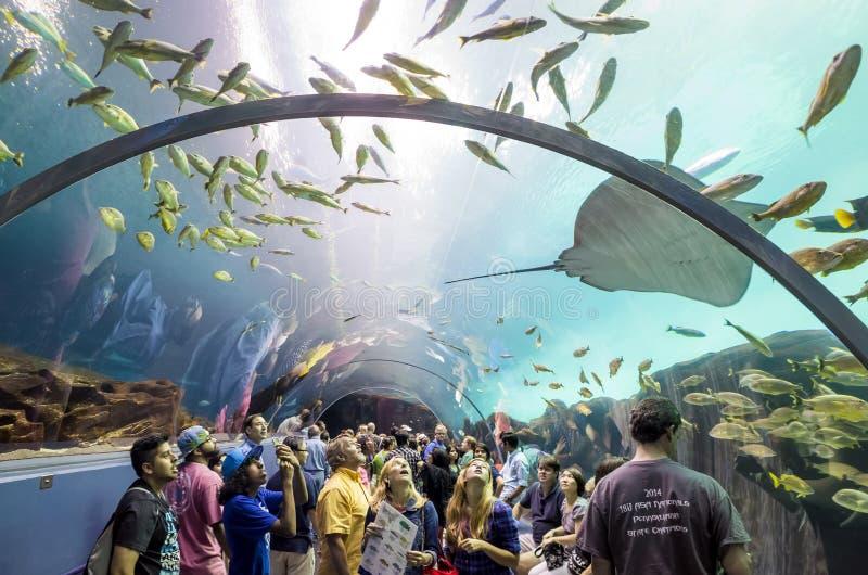 Binnenland van Georgia Aquarium met de mensen stock foto's