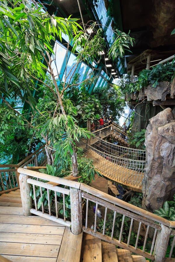 Binnenland van Haus des Meeres - openbaar die aquarium in Wenen, Oostenrijk wordt gevestigd royalty-vrije stock afbeelding