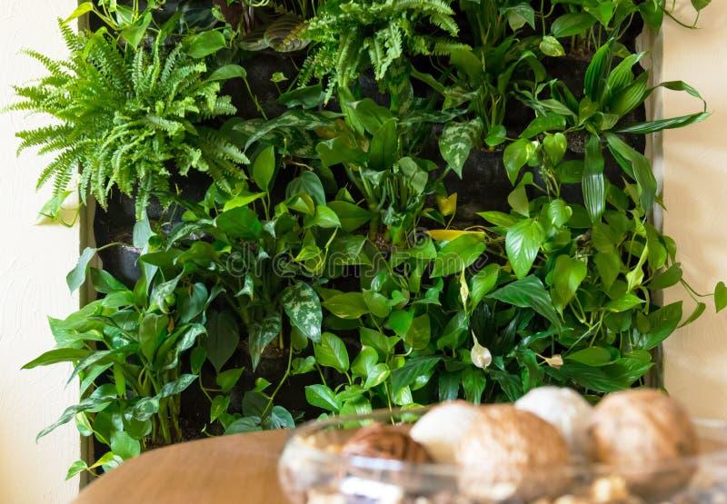 Binnenland van huis of vlak met natuurlijke groene installatiemuur royalty-vrije stock afbeeldingen