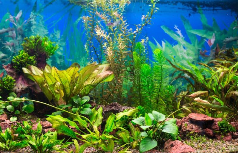 Binnenlands aquarium stock afbeelding