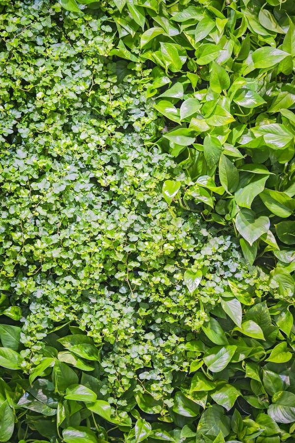 Binnenlands ontwerp, panelen van gras en installaties op de muur, decoratietextuur van groene bladeren stock foto's