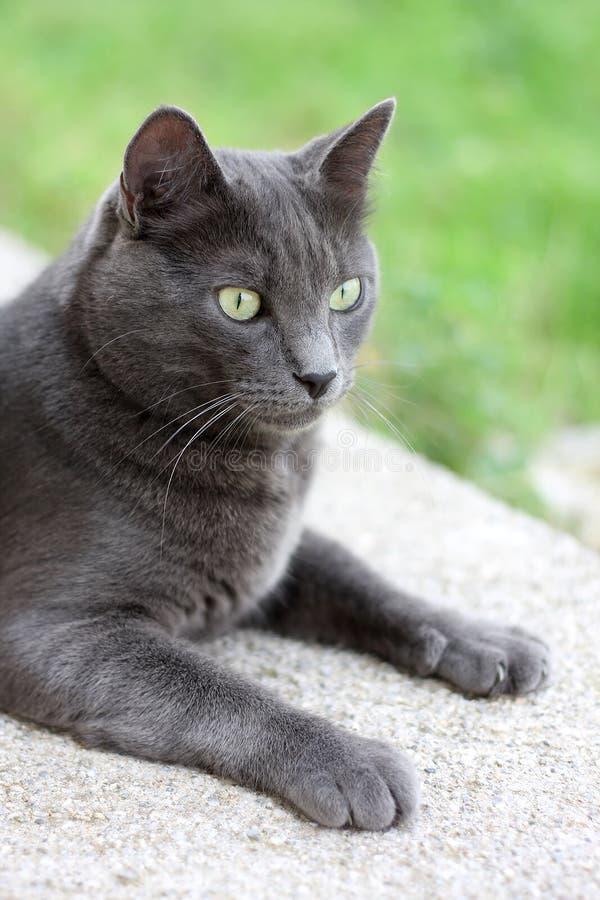 Download Binnenlandse kat stock foto. Afbeelding bestaande uit binnenlands - 10782446
