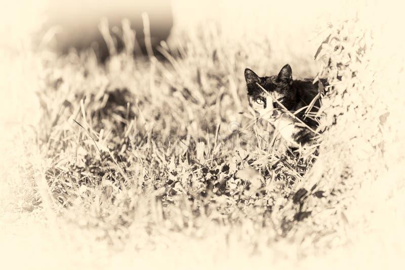 Binnenlandse kat die camera achter een boom bekijken Gestemd Sepia royalty-vrije stock foto