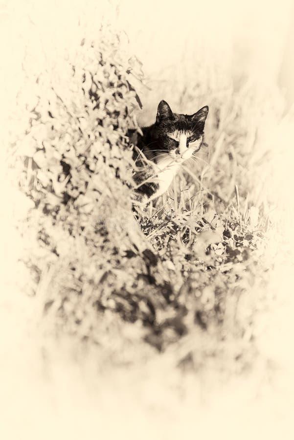 Binnenlandse kat die camera achter een boom bekijken Gestemd Sepia stock fotografie