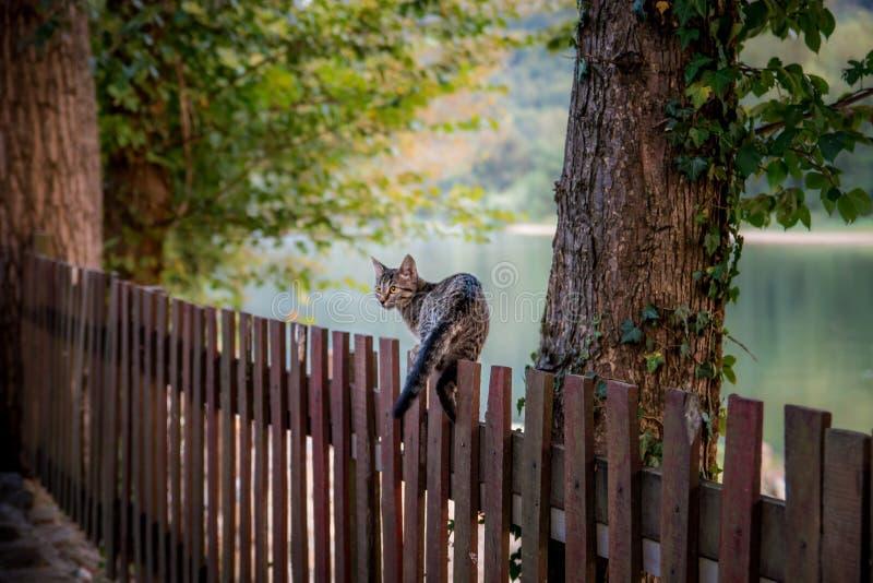 Binnenlandse kat die op houten omheining lopen royalty-vrije stock fotografie