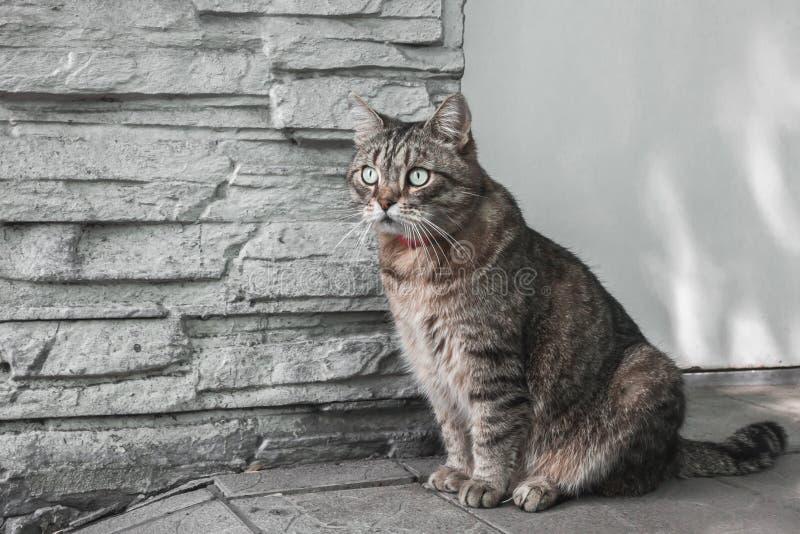 Binnenlandse kattenzitting op de straat dichtbij de muur van zijn huis royalty-vrije stock afbeeldingen