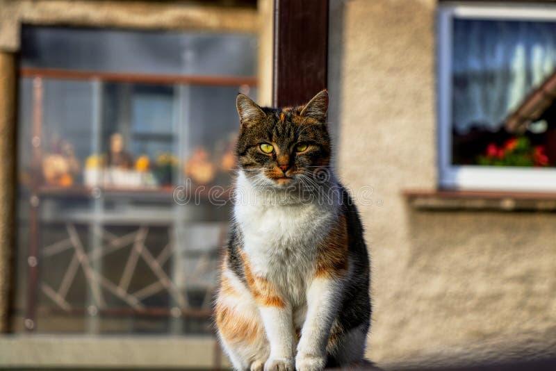 Binnenlandse modieuze katjeszitting in de hoek Mollige kat watchs één of andere beweging in tuin Intelligente leuke kat Interessa royalty-vrije stock foto