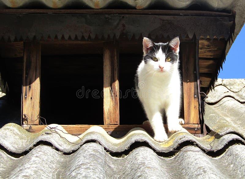 Binnenlandse zwart-witte kat bij het atttic venster op het dak van rustiek huis royalty-vrije stock afbeelding