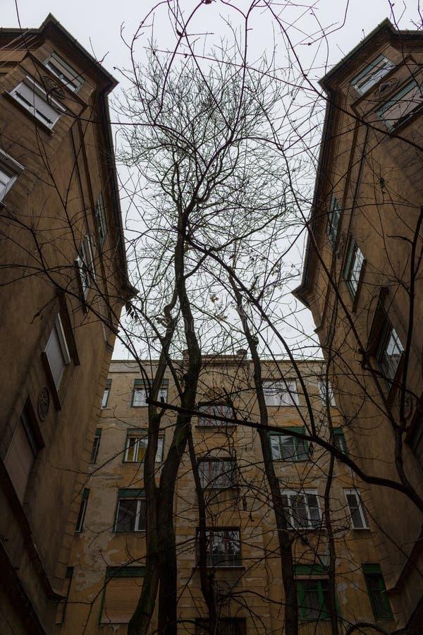 Binnenplaats met oude gebouwenvoorgevels en naakte boom in de middenbodemmening Buitenkant van oude huizen stock fotografie
