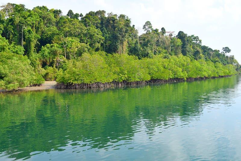 Binnenwater met Mangrovebos op Bank met Duidelijk Water - Rivier op de Grote Hoofdweg van Andaman, Baratang-Eiland, India stock afbeelding