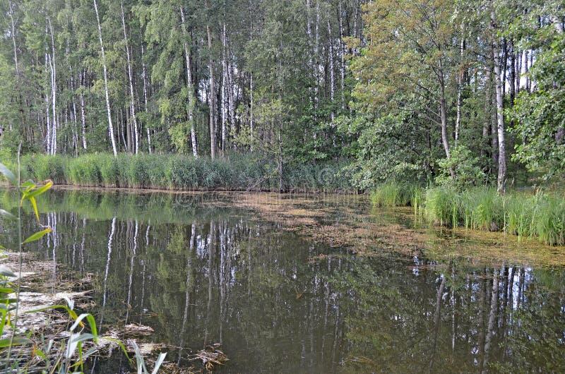 binnenwater Water met eendekroos royalty-vrije stock fotografie